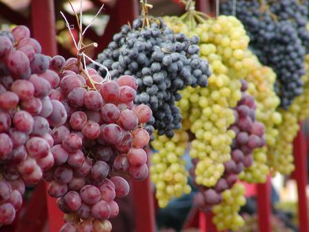العنب فائدة